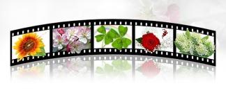 filmstrip-2208127_640